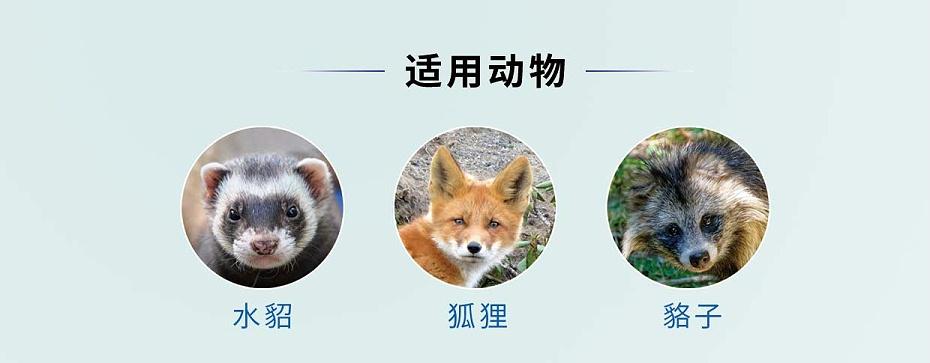 硫酸黏菌素可溶性粉-貂狐貉专用-青岛康地恩