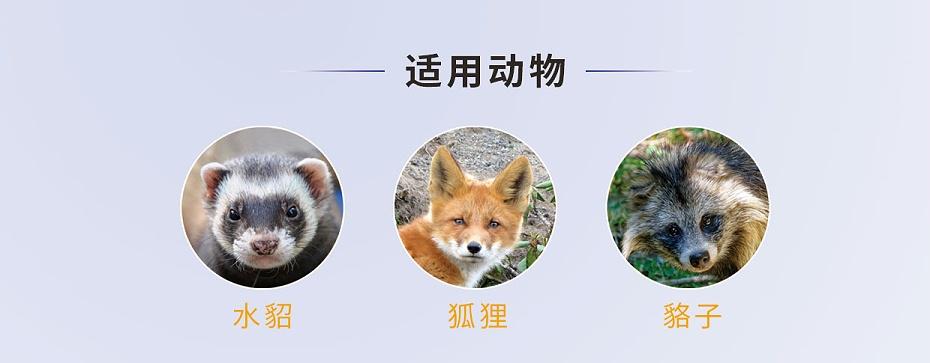貂、狐、貉等毛皮动物脑膜炎、心内膜炎的防治用药厂家批发-青岛康地恩