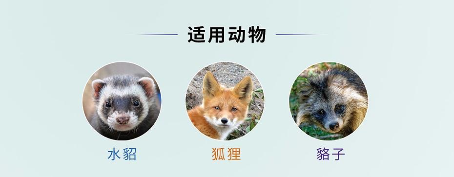 貂、狐、貉呼吸道用药-恩诺沙星溶液-青岛康地恩