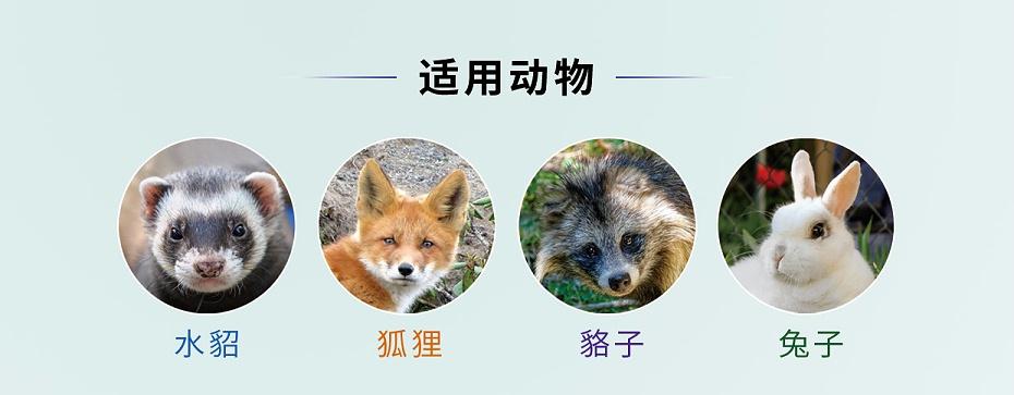 貂狐貉兔毛皮动物抗病毒药双黄连口服液青岛康地恩厂家直销批发零售
