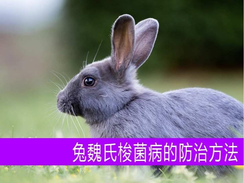 【康地恩养兔】兔魏氏梭菌病的防治方法