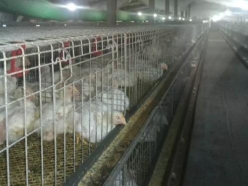 笼养鸡舍通风降温的纵向风速数据检测分析