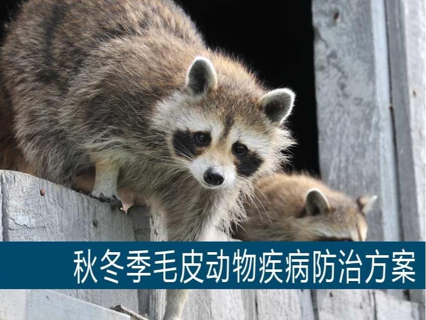 秋冬季毛皮动物疾病防治方案【康地恩特养】