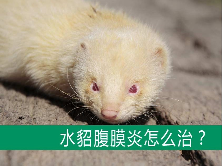 貂狐貉兔毛皮动物用药厂家批发-青岛康地恩