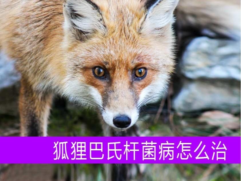 康地恩狐狸巴氏杆菌病用药批发