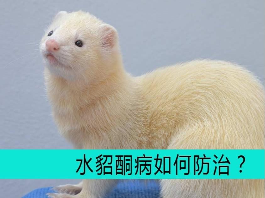 毛皮动物用药厂家批发-青岛康地恩