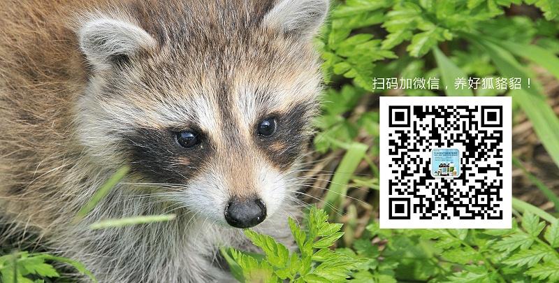 貂狐貉的旋毛虫病的防治