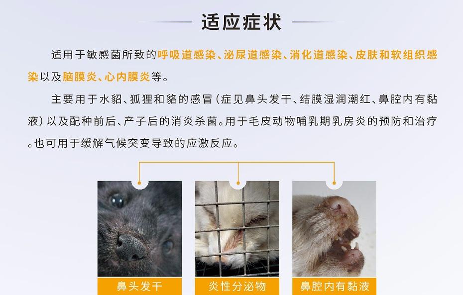 貂、狐、貉等毛皮动物脑膜炎、心内膜炎的防治用药厂家批发-青岛康地恩2