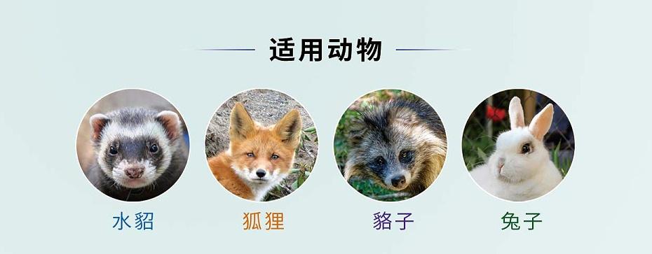 貂狐貉兔毛皮动物支原体呼吸道肺炎用药盐酸沙拉沙星可溶性粉厂家批发-青岛康地恩